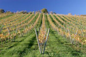 Pálava vineyards, Czech Republic